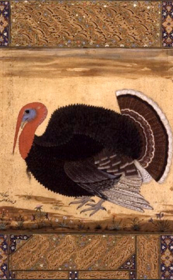 turkey_hen_mughal_painting_mansur