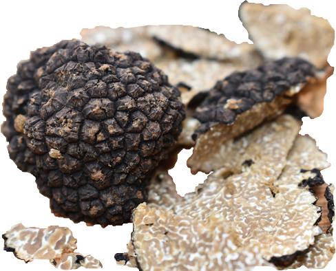 Frische Schwarze Herbsttrüffel (Tuber uncinatum) kaufen - Die Trüffelsaison hat begonnen