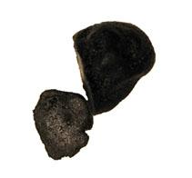Die tuber indicum wird auch Indische Trüffel, Schwarze Chinesische Trüffel oder Szechuan Trüffel genannt. Sie wird hauptsächlich in Indien, China, Marokko und Japan angebaut. In Wildform kommt sie hauptsächlich in sehr warmen Gebieten Asiens vor. Die Szec