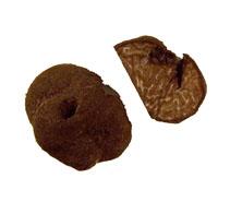 Die deutsche Bezeichnung für den tuber rufum ist Rostbräunliche Weichtrüffel. Diese Trüffelart wurde hauptsächlich in höheren Lagen gefunden bis in einer Höhe von 1.600 m. Sie leben gerne bei Eichen oder anderen Laubbäumen. Nadelgehölze als Wirte mögen si
