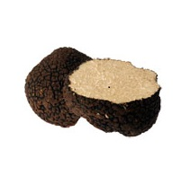 Der Fruchtkörper des Sommerstrüffel hat ähnliche Abmessungen wie der kostbare schwarze Trüffel.Es ist bekannt für das Warzenperidium mit groben, pyramidenförmigen Warzen, deren Gesichter nach dem Waschen quer fein gestreift und schwarz glänzend sind.