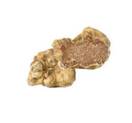 Der Fruchtkörper variiert in der Größe von einer Erbse bis zu einer großen Orange und ist selten noch größer (Trüffel von außergewöhnlicher Größe und mit einem Gewicht von über 2 kg wurden gesammelt)