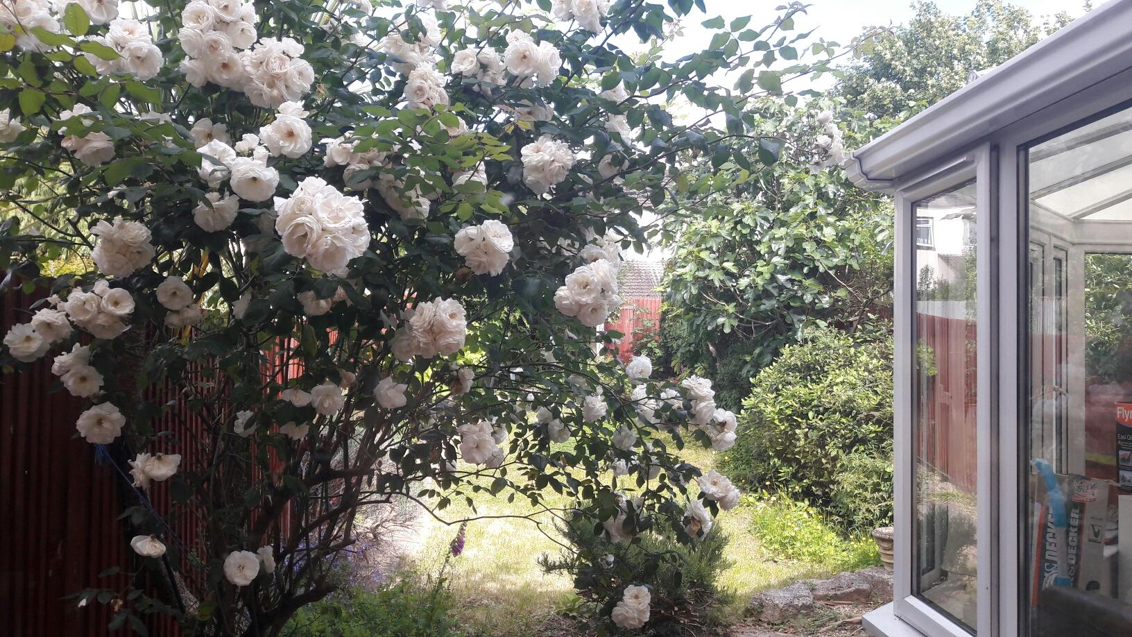 EIn Gruss an meine Tante - stehen hier im Garten