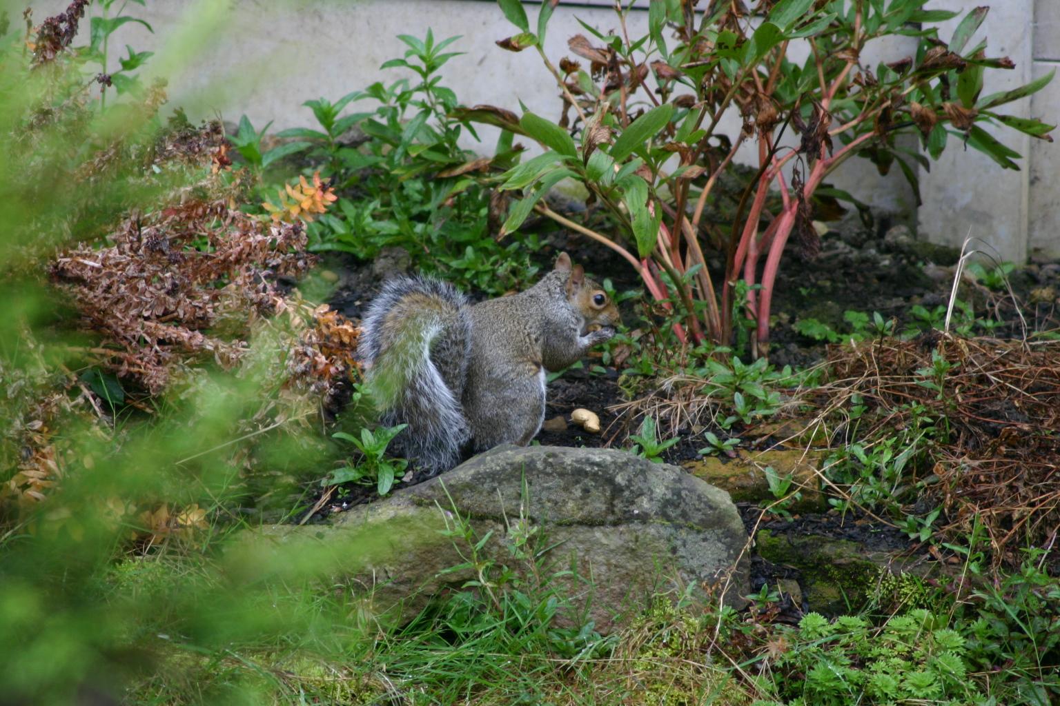 庭にときどき、リスさん登場!