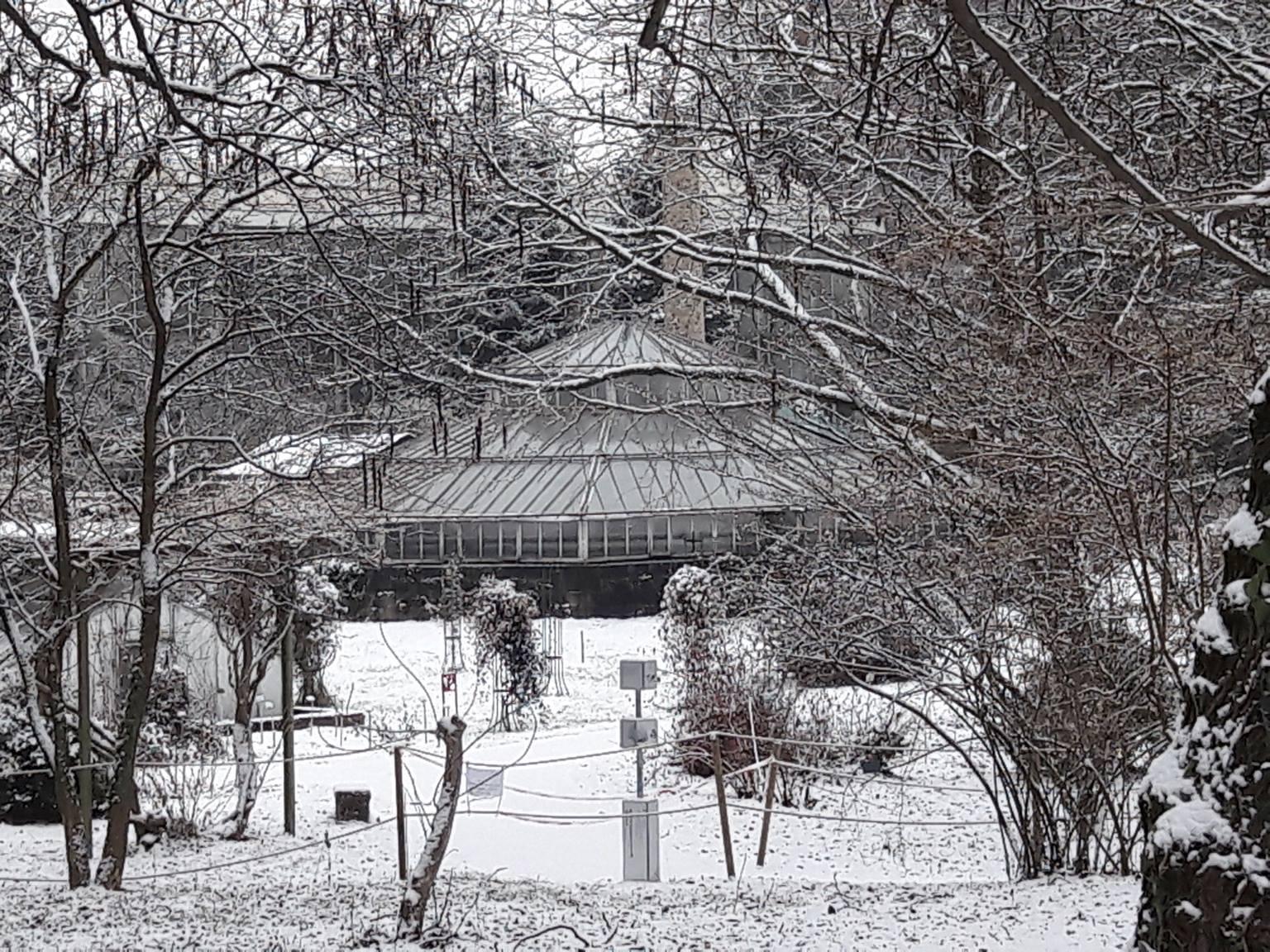 Galerie photos association des amis du jardin botanique - Jardin botanique de l universite de strasbourg ...