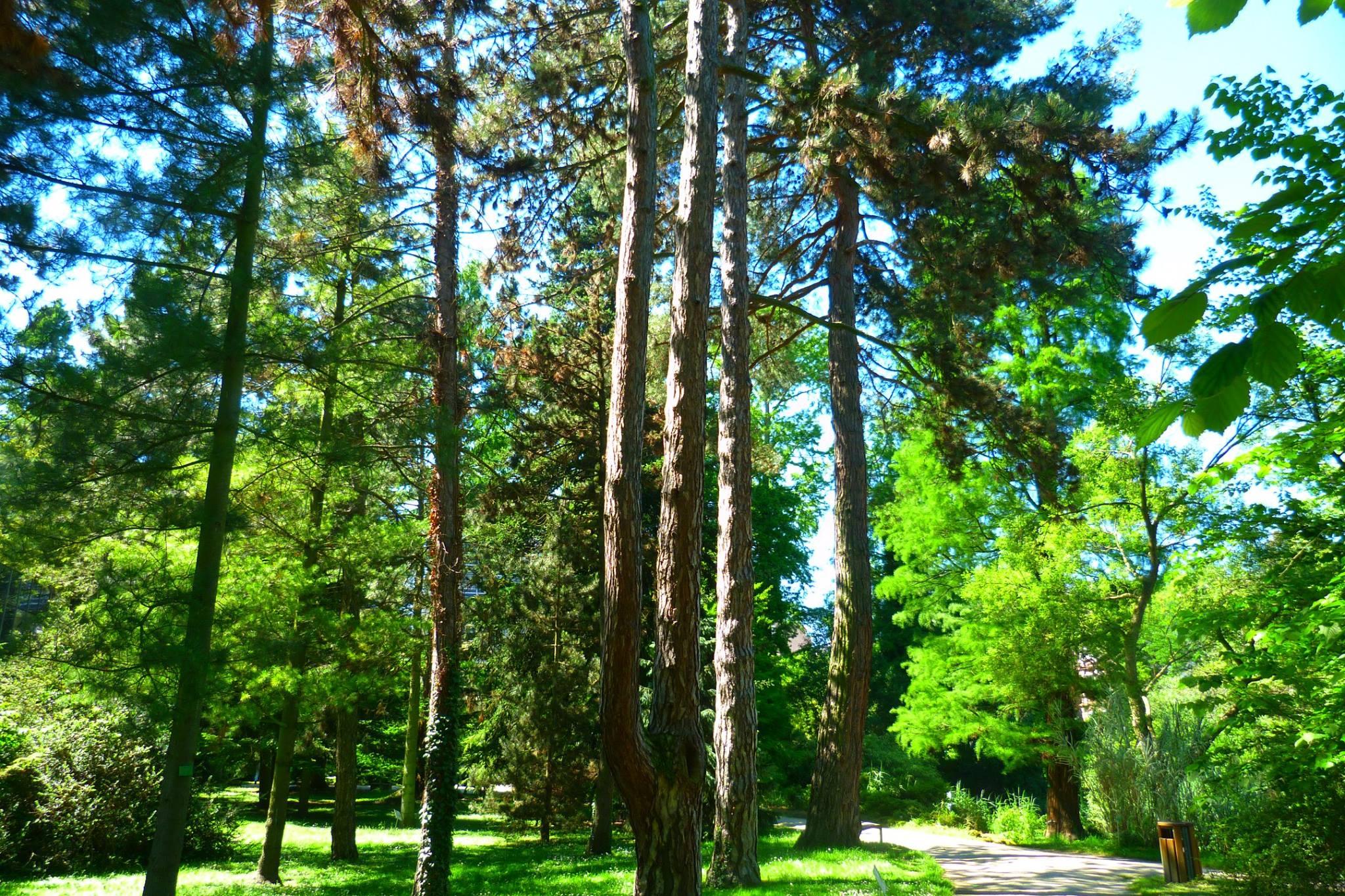 Galerie photos association des amis du jardin botanique for Amis jardin botanique