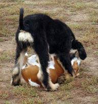 Kromfohrländer Hundeschule