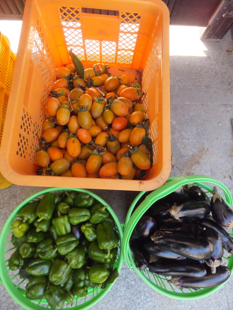 収穫してきた『つるの子つるし柿』『ピーマン』『なす』