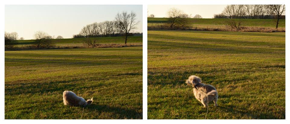 Dunja genießt ihr Hundeleben