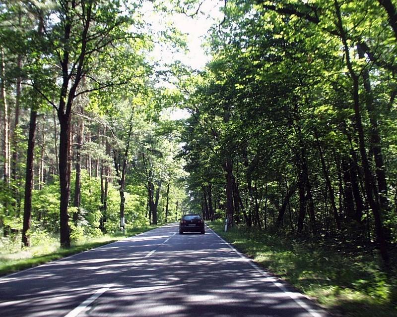Straße zwischen Baruth und Golßen