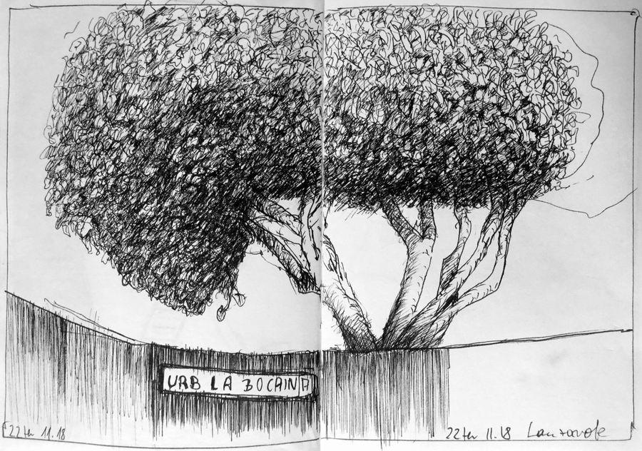 """© 2018 Skizzenbuch Lanzarote, Prächtiger Baum in der Anlage """"La Bocaina"""""""