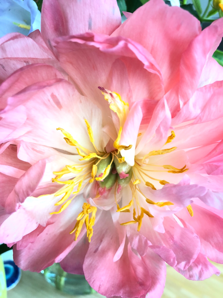 time to bloom- yin yoga with Elena