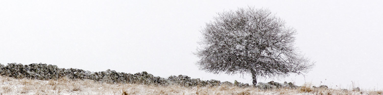 Le muret et l'arbre, Aubrac