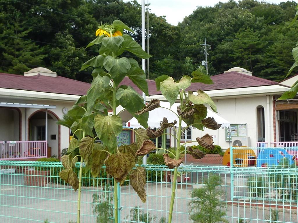 子育て支援ふれあいセンターと初瀬保育園(本荘公民館の隣り/徒歩7分くらい)