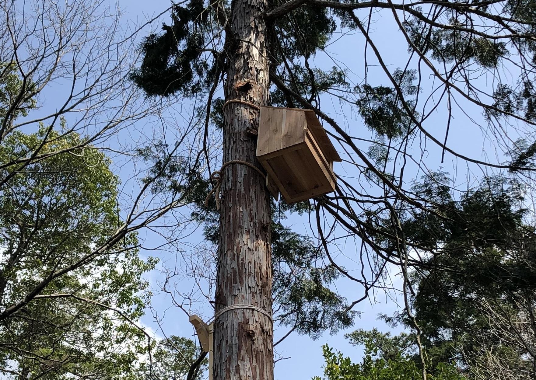 野鳥の巣箱を作りました