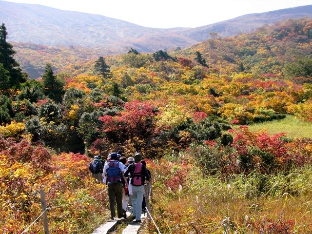 栗駒山トレッキング