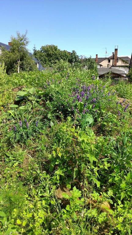 Auf der Geländemodellierung breiten sich Wicken und andere Pflanzen aus