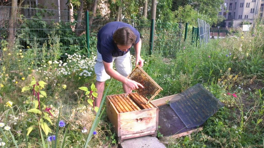 ...großes Staunen über die vielen Bienchen
