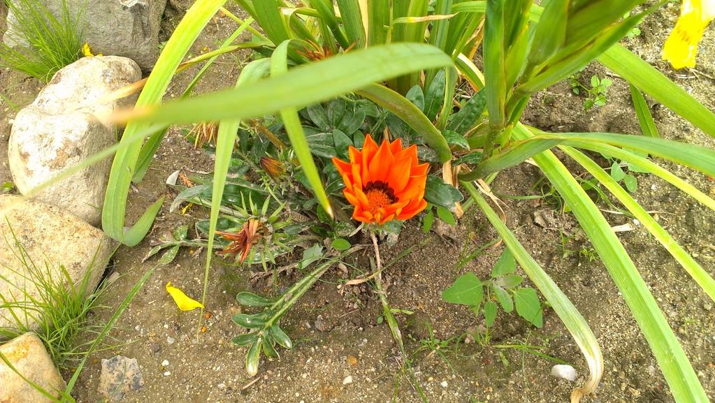 Am Miniteich fühlen sich Lilien und andere Blüher wohl