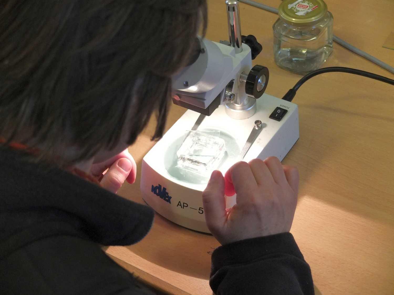 Der Bücherskorpion unterm Mikroskop | Torben Schiffer