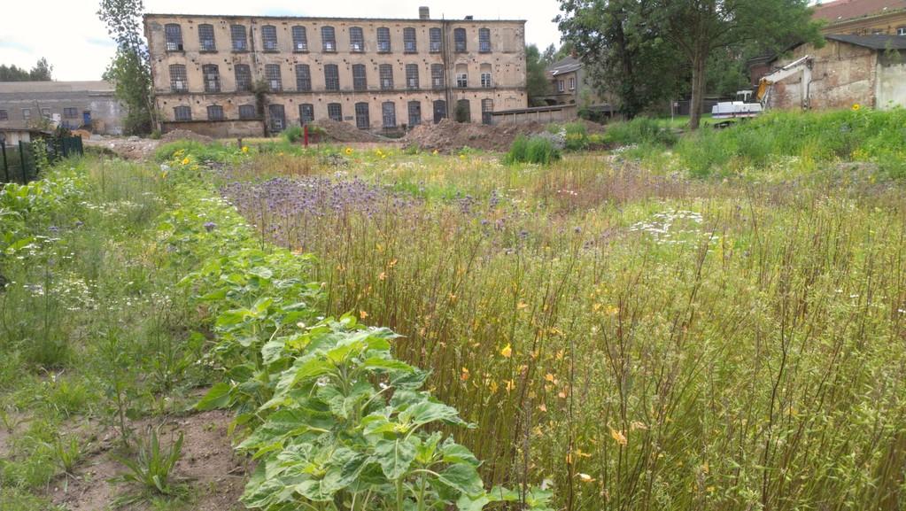 Wildblumenteppich mit Sonnenblumenrand