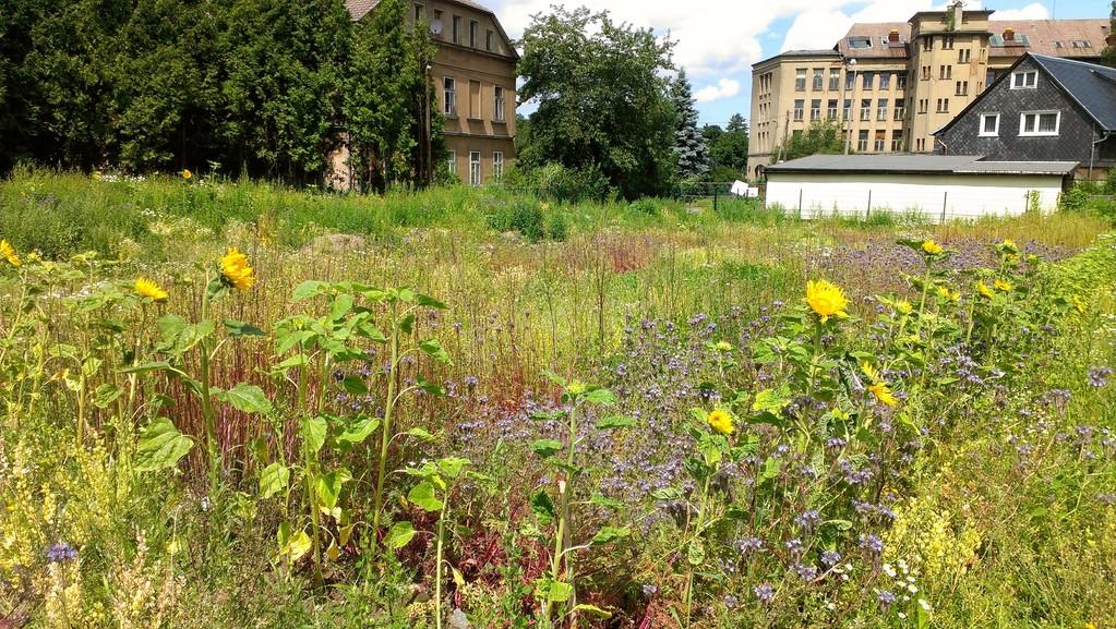 Wildblumenteppich in Perspektiven