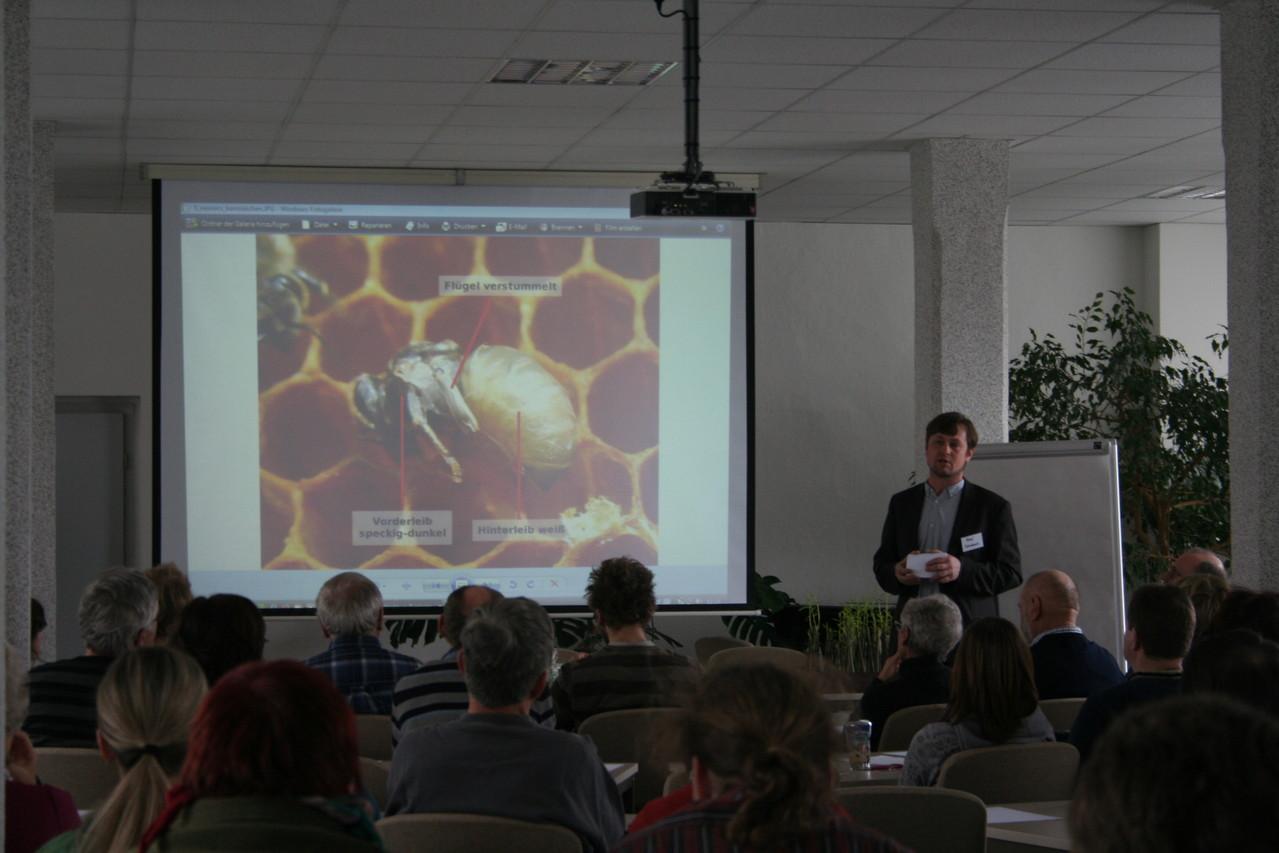 """René Schieback: """"Bienensterben - was ist da los?"""""""