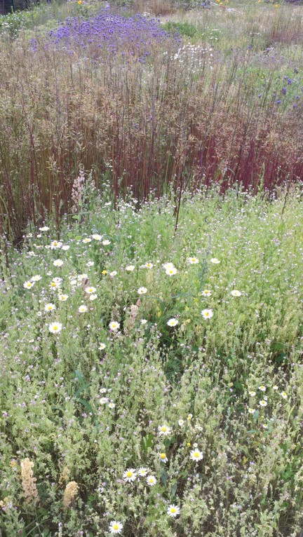 Wildkräuter in Blüte
