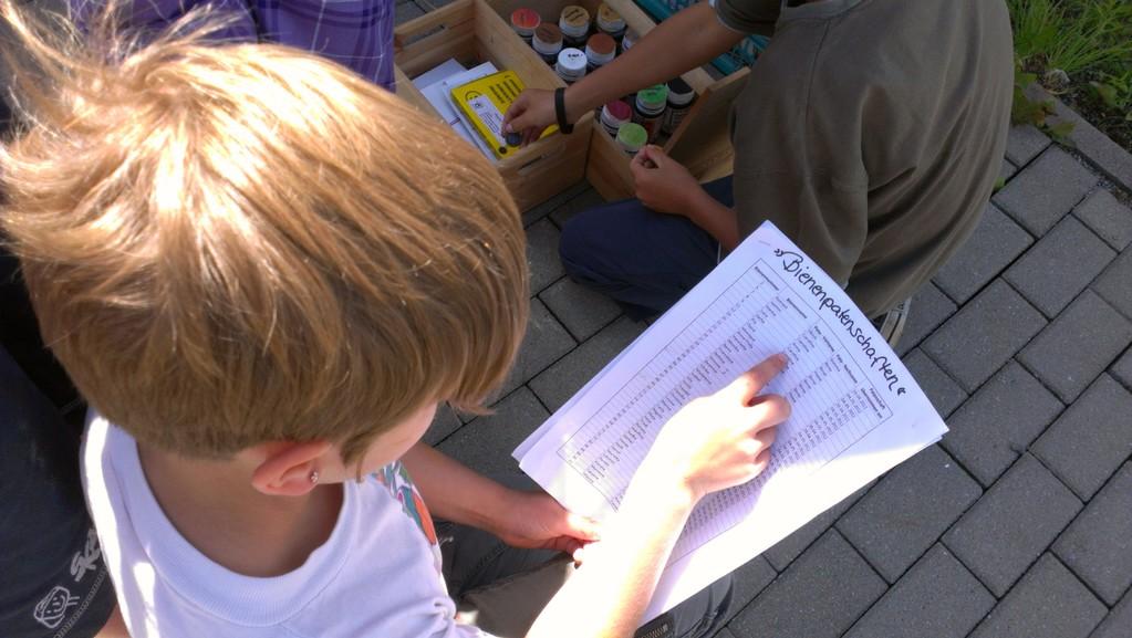 Bienenpatenschaften werden studiert