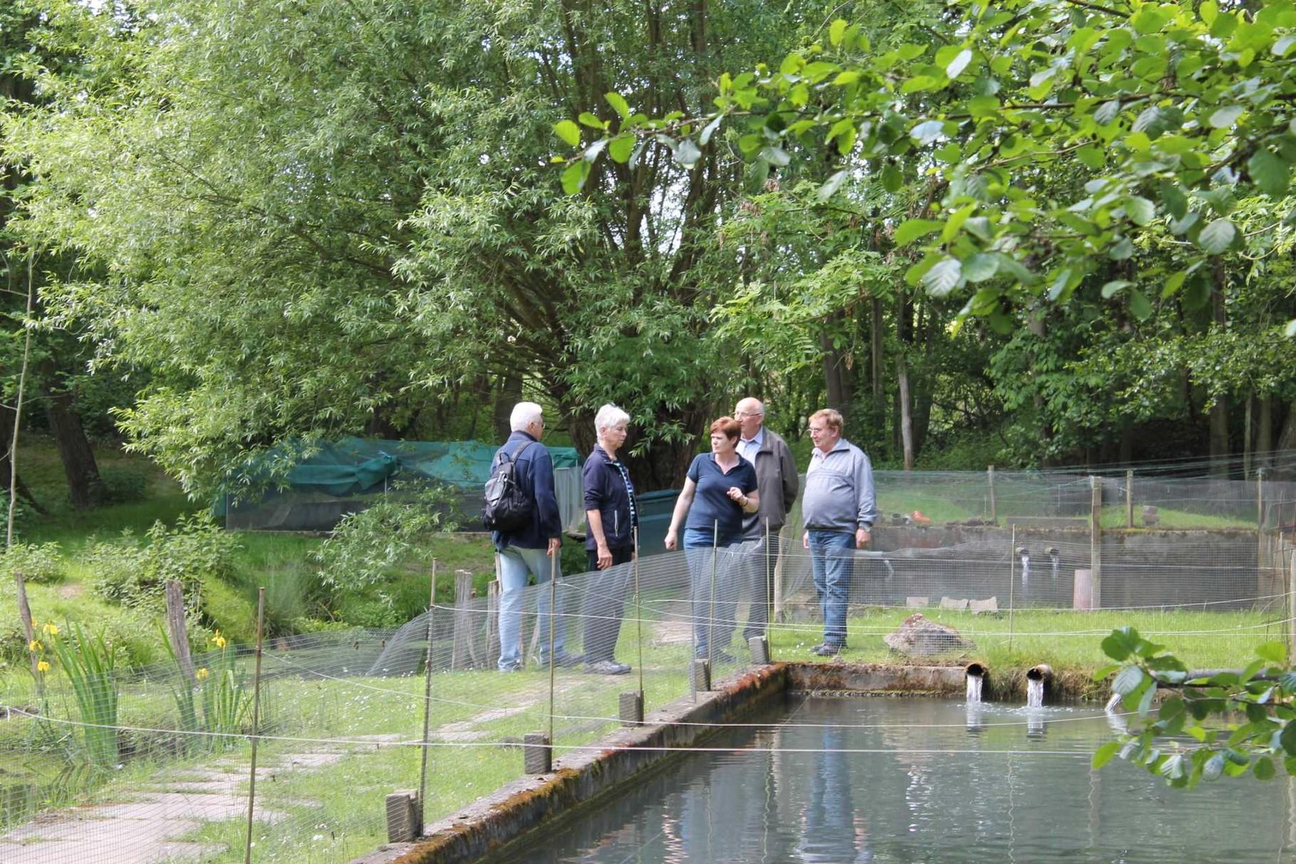 Forellenzucht ernst in gochsheim kraichtalers webseite for Garten fische