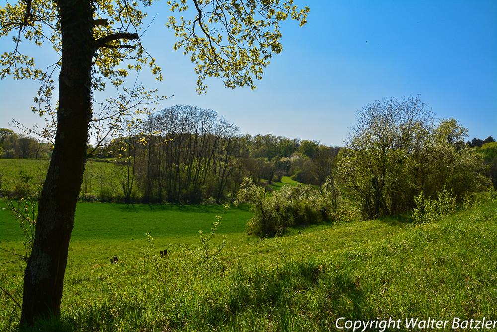 Blick über das Naturschutzgebiet bei Oberöwisheim