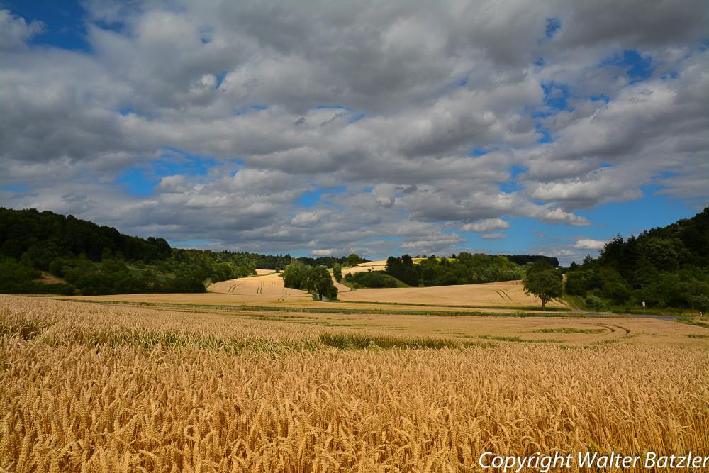 Getreidefeld bei Landshausen
