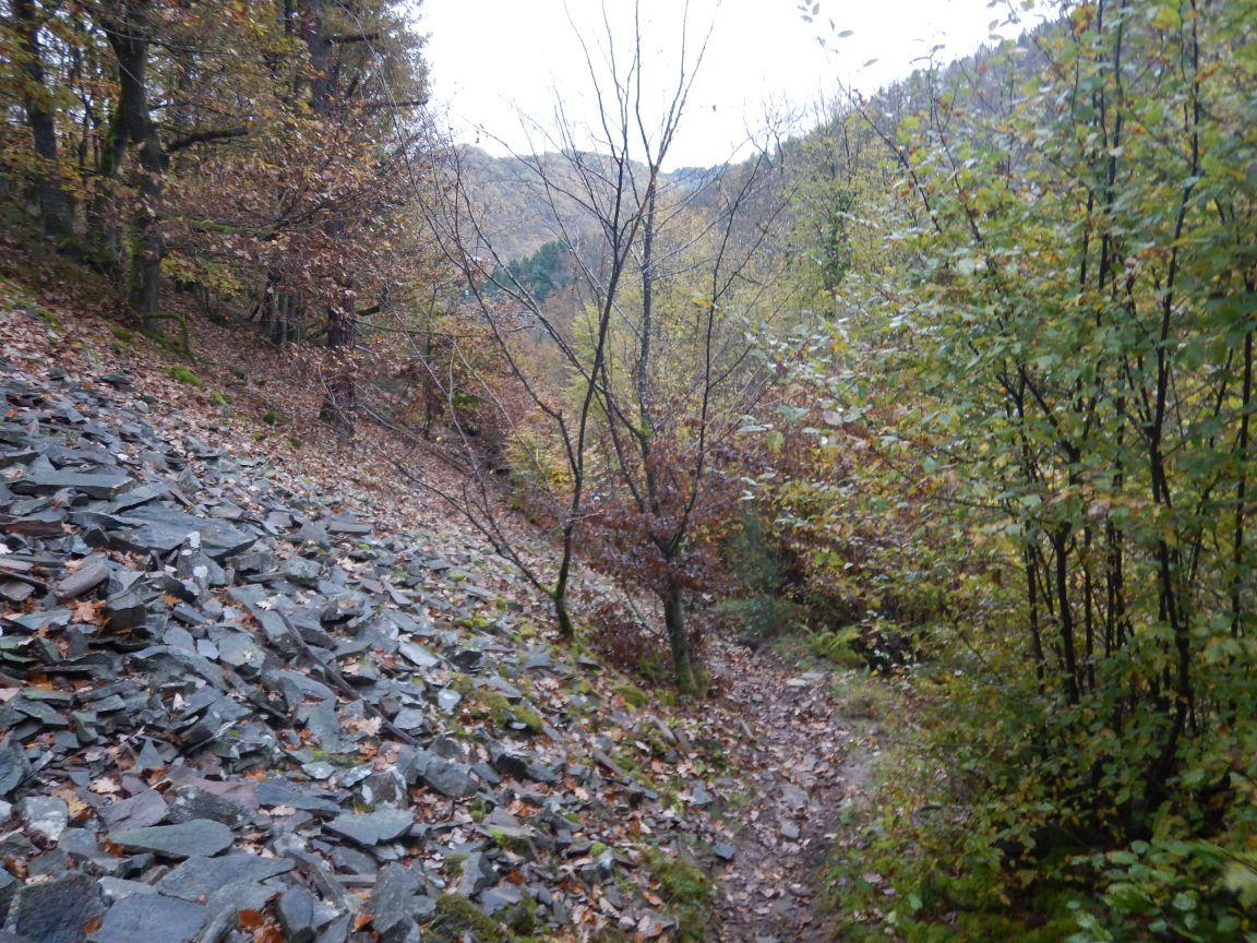 Saarschleifetrail - Wieder hinauf zu Cloef