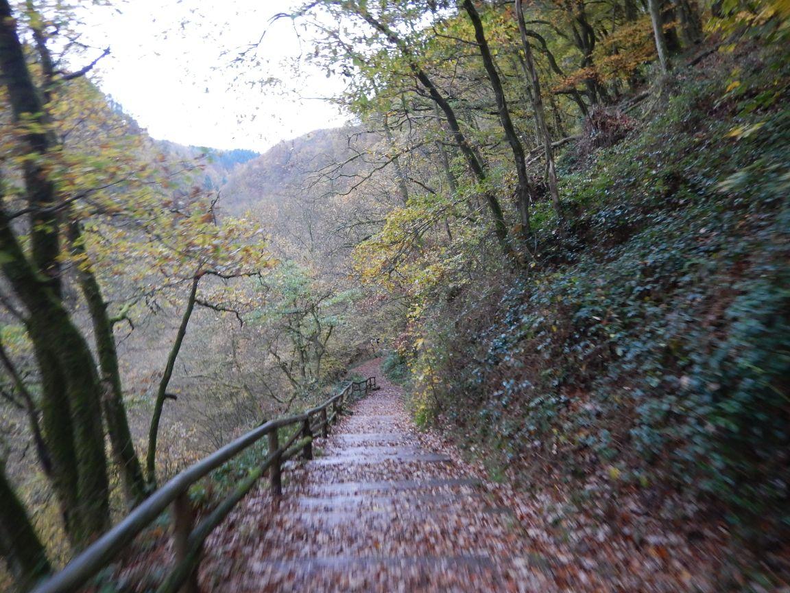 Saarschleifetrail - Steinbachtalschlucht