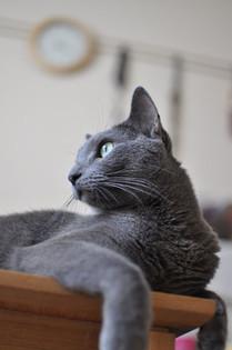 おばたキャプテンちの飼い猫-ナッツ
