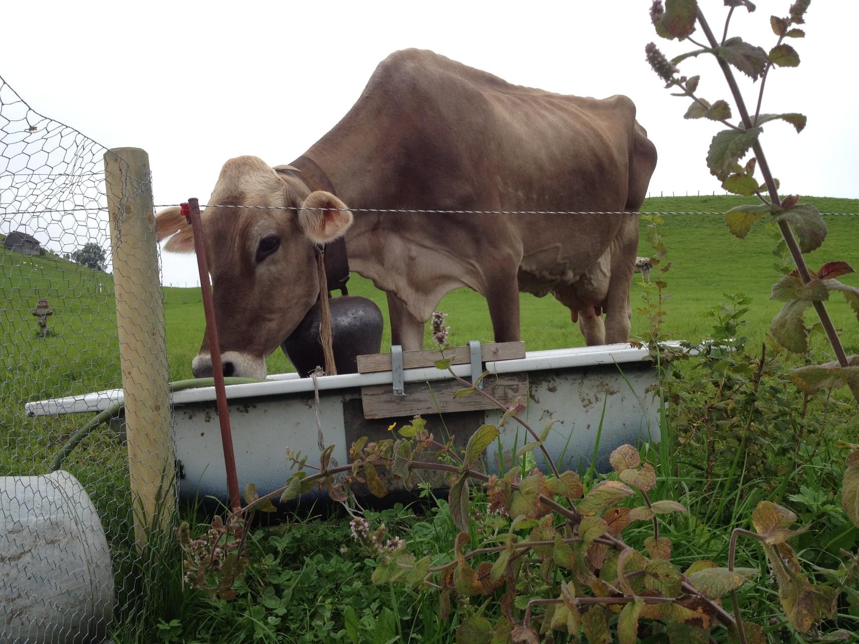 Landleben vor der Haustüre