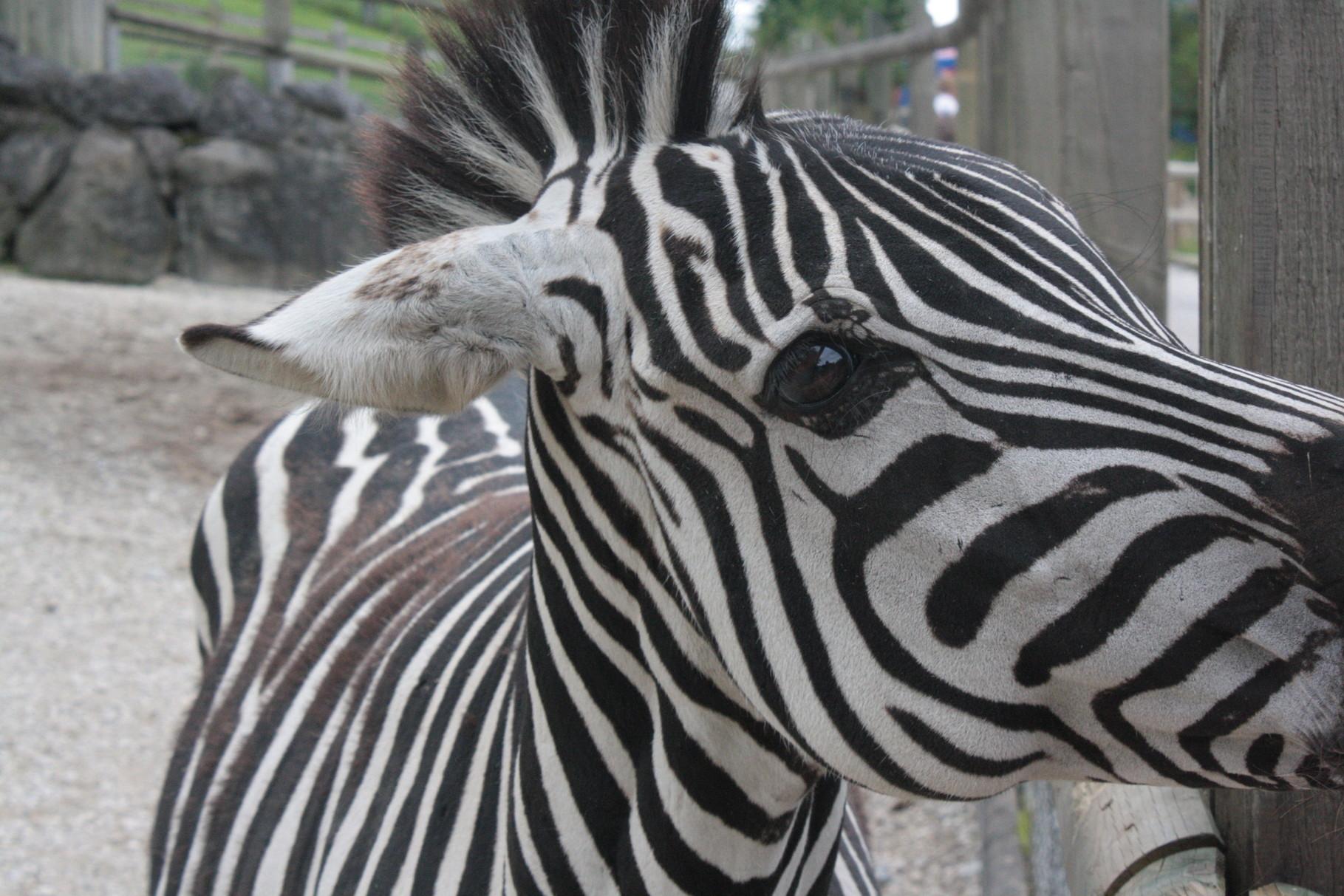 Walter Zoo