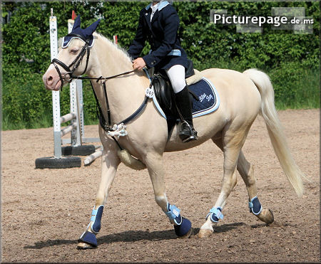 TS Imaginary RS - Deutsch-Arabisch Partbred - von WPE Illuminated xx