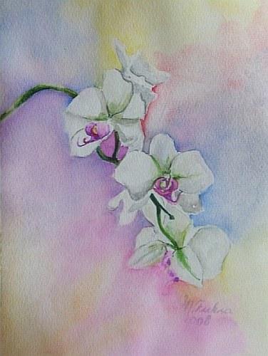 Orchideenzweig 2008