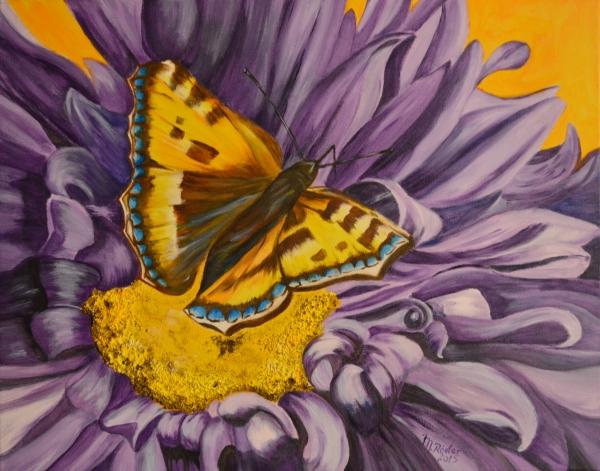 Schmetterling 2015
