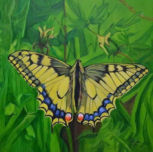 Schmetterling 2017
