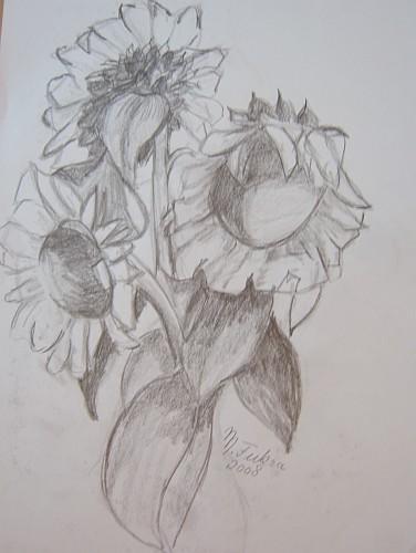 Sonnenblumen 2008