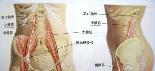 腰痛に関わる筋、骨格
