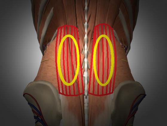 背~腰部筋の痛み、つかれ、違和感