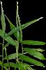 jengibre lista de plantas medicinales