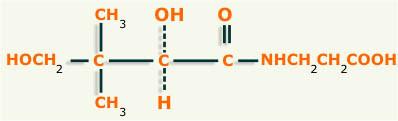 acido pantotenico estructura