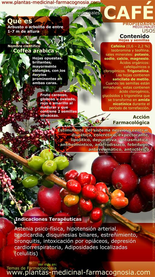 Propiedades y beneficios medicinales del café