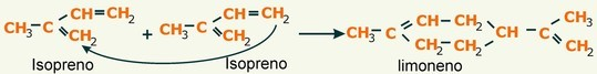 terpenos - condensación isopreno