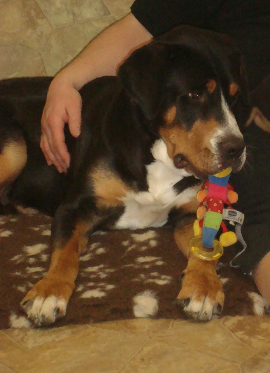auch Bonnie mag Spielzeug