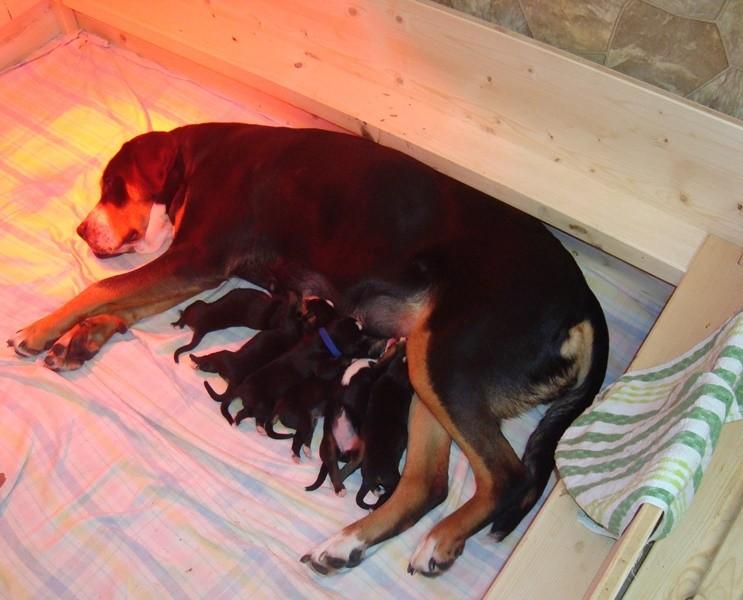 da kann die Mama ja schlafen